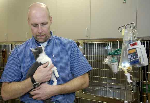 Dr. Joel Percival tends to a kitten in the recovery area of the newly located Big Creek Veterinary Hospital in Concord Township. (photo credit-Maribeth Joeright/MJoeright@News-Herald.com)